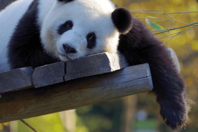 Panda Update 660x440 - SEO: Was tun nach dem Panda-Update?