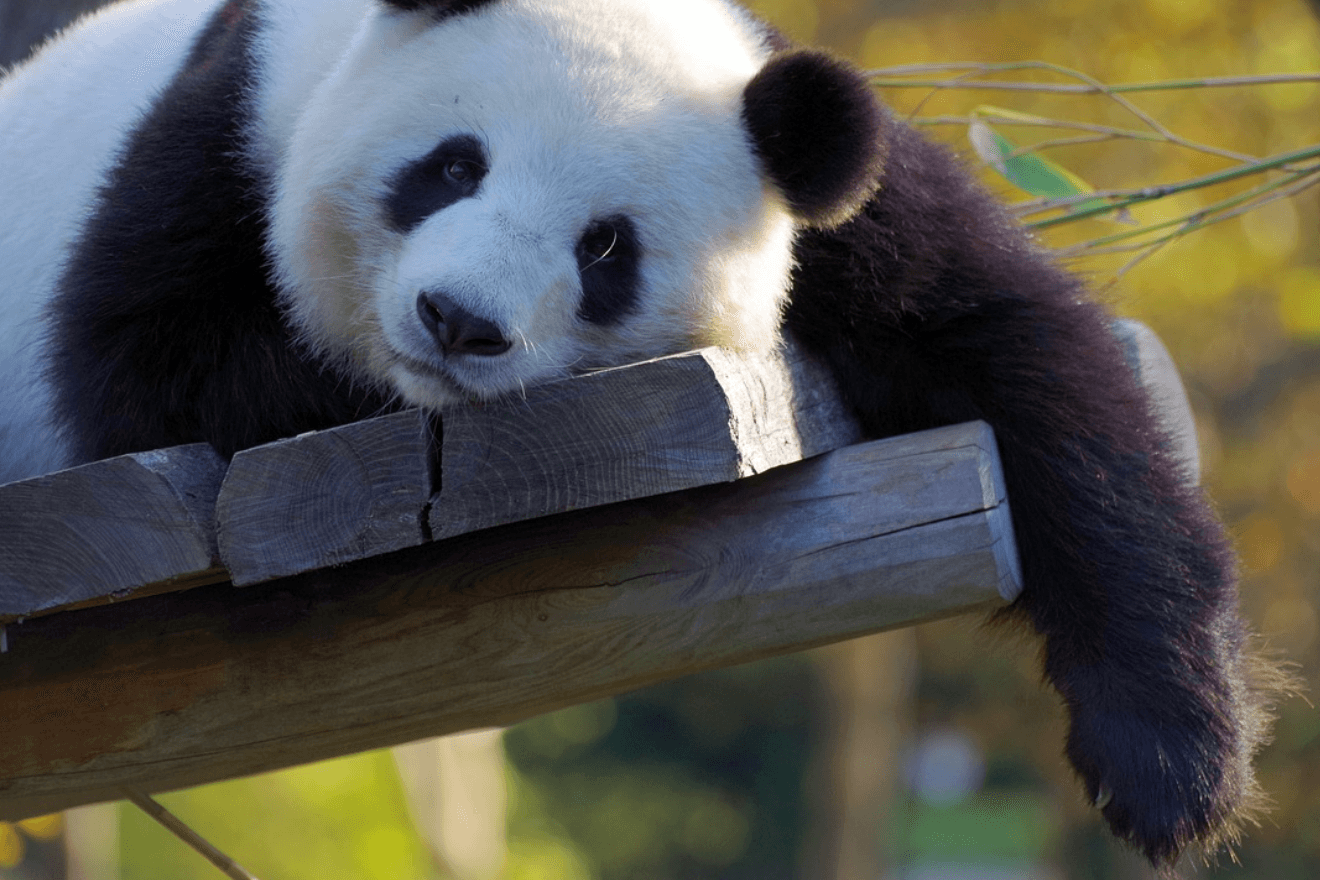 Photo of SEO: Was tun nach dem Panda-Update?